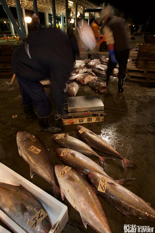 时间临近五点,场内多了不少头戴别着绿色名牌的黄帽子的人,他们是来参加拍卖的中间商,正查看鲜鱼的成色...