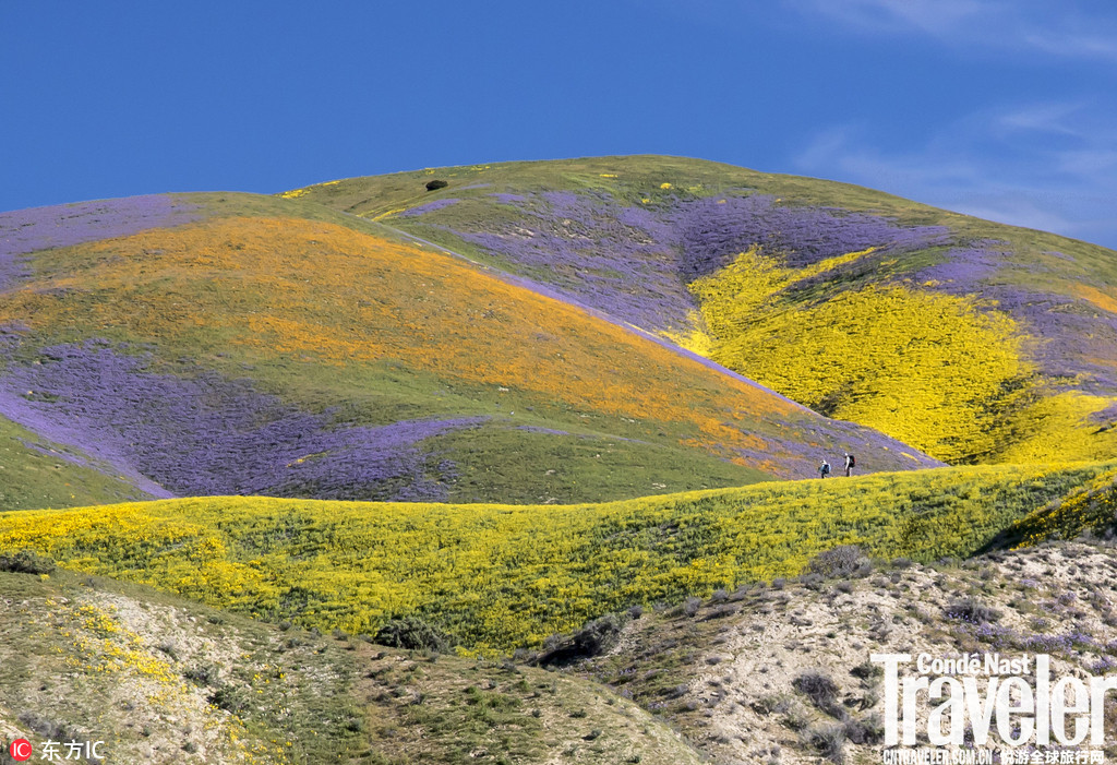 美国南加州野花