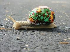 保护蜗牛的彩壳行动