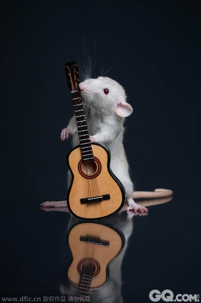萌鼠弹吉他