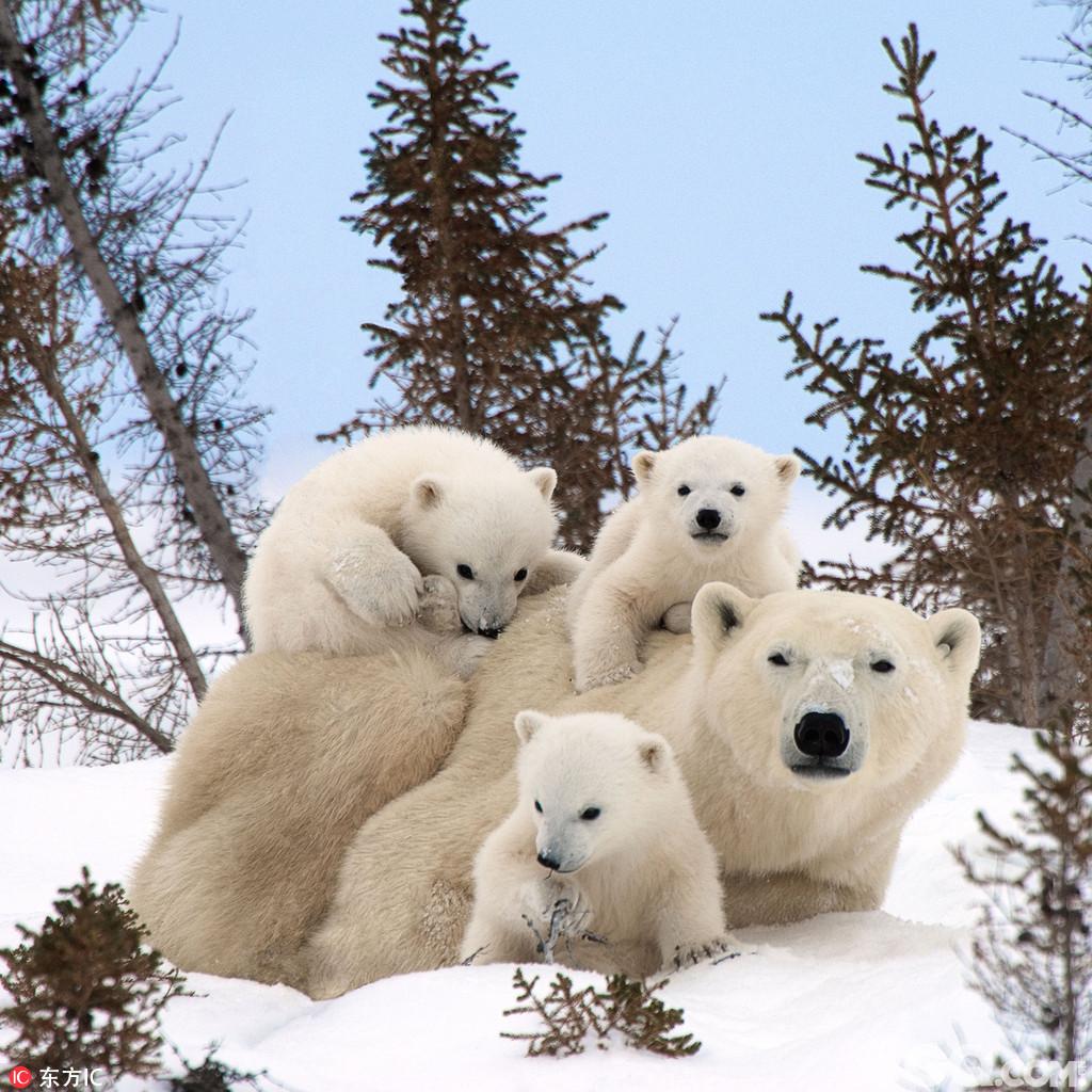 晒晒小动物们的温馨全家福