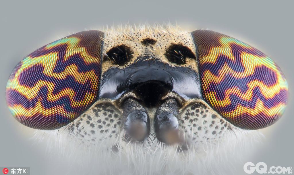 自然野生动物摄影师kutub