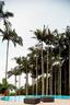 别墅外,绿意盎然的花园向前延伸,远处便是广阔的南海,近处的泳池则圈出一条优美的弧线。炎炎夏日中,泳池是一家人最常聚会的地方,高大的热带树木成为家门口的天然屏障。