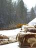 户外露台上,驯鹿皮和西藏马海毛的靠垫在冰天雪地中更显得暖意洋洋,它们都来自巴黎Maison de Vacances。