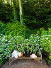 """""""年年岁岁花相似,岁岁年年人不同。""""Madison Cox负责这里的花田。花朵围绕着Janus et Cie出品的人造木长椅。"""