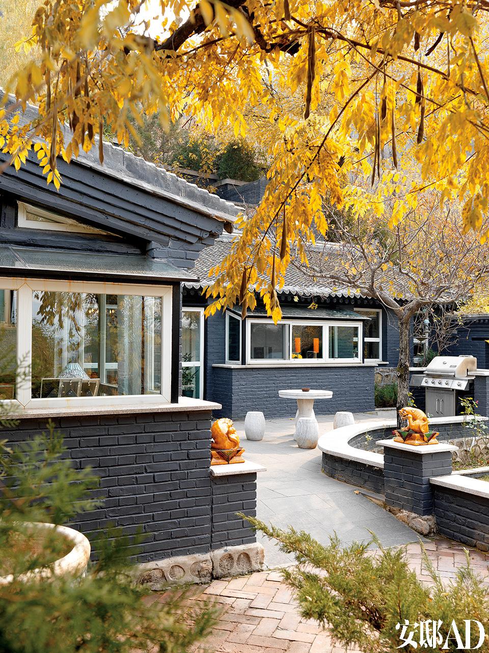 初冬时节,前院里植物的叶子都变黄了,老槐树结了长长的豆荚,很有老北京风情。