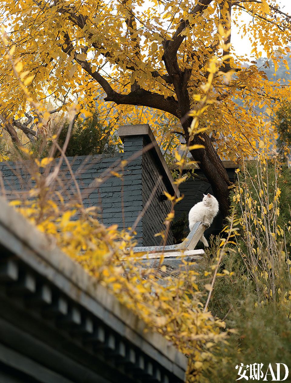 家里的一只白猫蹲在屋顶的飞檐上。