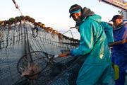 造访鱼市场的第二日,我们转道平户市,体验了一回当渔夫的滋味。依旧在凌晨出发,在约好的Ayaka水产集合...