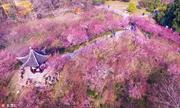 江苏扬州, 盼望着,盼望着,春天来了。 在春节期间,随着天气回暖,扬州市茱萸湾公园内漫山梅花竞相绽放...