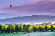 美國加利福尼亞納帕谷納帕谷是一個丘陵地帶,似平原又頗有起伏,似山地又不見峰巔,可以乘坐熱氣球一探究...