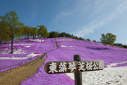 东藻琴芝樱公园