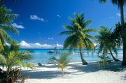 欢迎来到裴济岛9朵云餐厅(Cloud 9),在这里,你可以在享受浮潜、冲浪、水上摩托、皮划艇的同时,吃到最...
