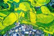 云南省曲靖市羅平縣,綿延萬頃的油菜花開了,田野上、小山上、山谷里,一大片、一小塊黃色的油菜花點綴著...