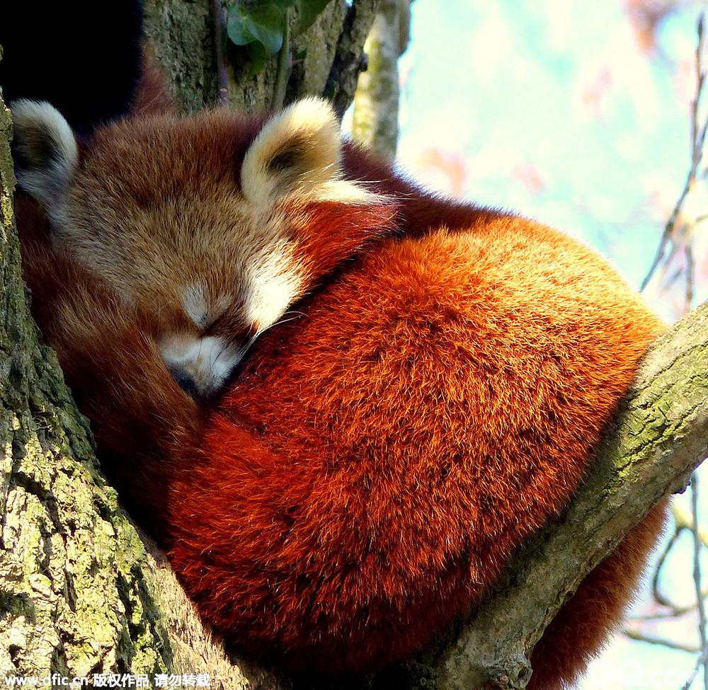 【图】2015年伦敦野生动物协会摄影获奖作品新鲜出炉
