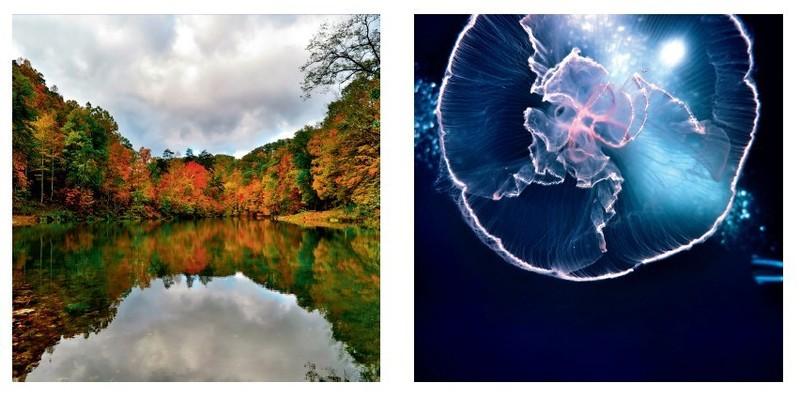 年度iPhone摄影大赛世界摄影师JULIOLUCAS纯二氧化氯发生器图片