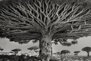 十四年寻找世界上最古老的树木