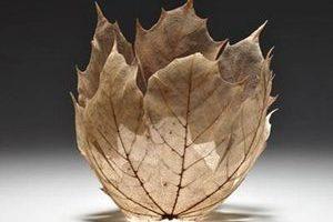枯叶碗:自然艺术的别样美感
