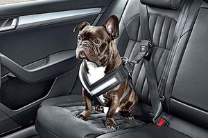 让你的宠物在车里更安全