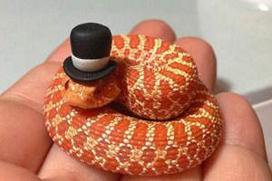 百变帽子!蛇也可以变很萌