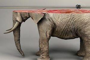 """无可替代!""""3D打印""""呼吁关注濒危物种"""