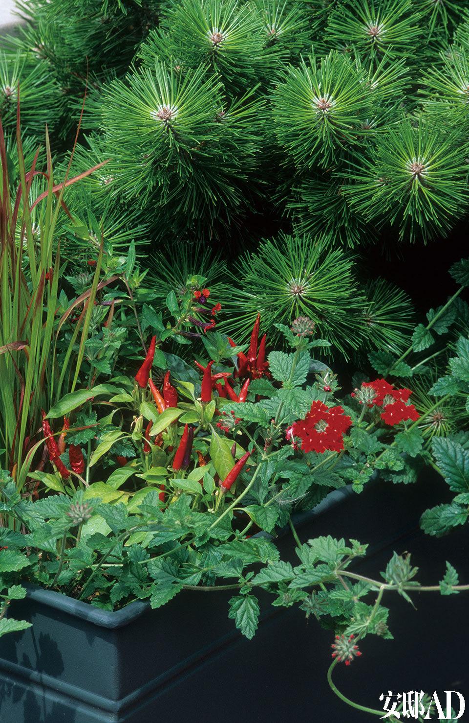Vegetable Gardens 种花种草,不如巧心种菜!