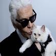全民撸猫季 你的撸猫段位是几段?