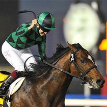 2014浪琴表世界最佳赛马奖揭晓
