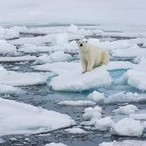 北极气温达到38℃ 这里是你需要知道的-家居