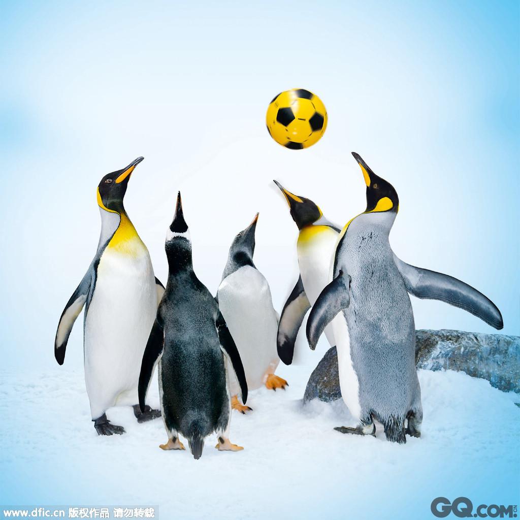 新西兰正在举办一场别开生面的运动会,企鹅运动会,由帝企鹅和金图企鹅参加,比赛项目包括足球、飞盘、冲浪、水球和赛跑,比赛地点在新西兰The Kelly Tarlton Arctic Encounter海洋中心。这个海洋中心1994年建立,拥有80只企鹅,举办企鹅运动会是为了庆祝其建立15周年。